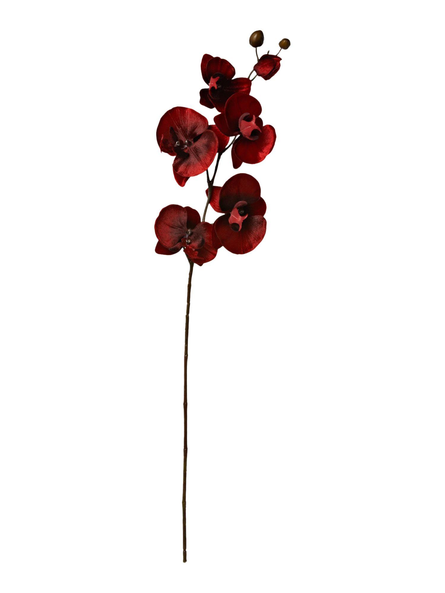 Linea Deep red velvet orchid single stem : 1741100303598077 from www.rosebys.co.uk size 1500 x 2000 jpeg 63kB